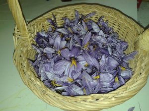 Saffron of Sicily